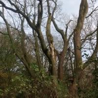 deadwooding1