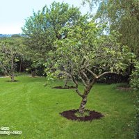OrchardPruning1After2