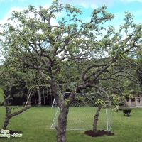 OrchardPruning1After1
