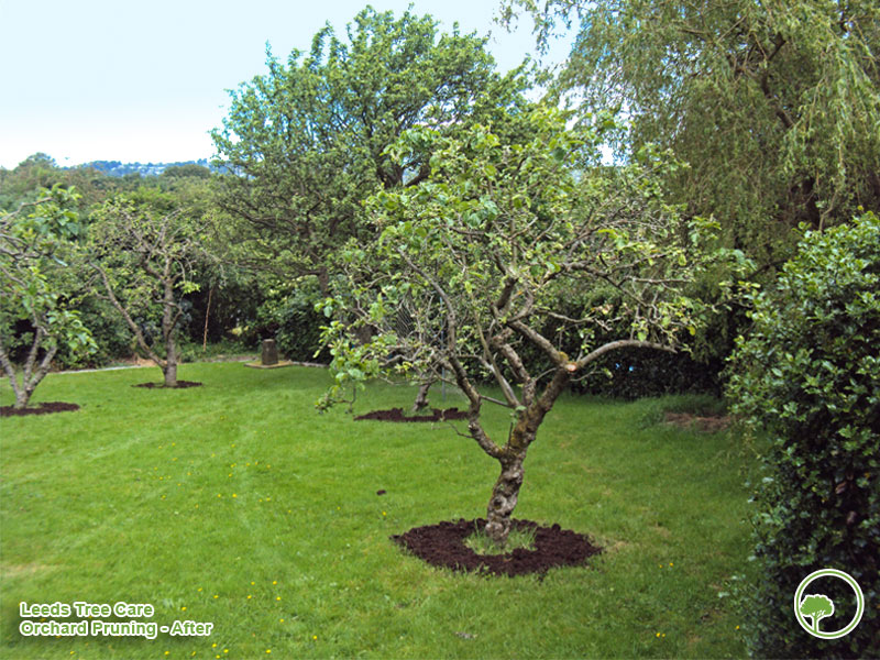West Yorkshire Pruning